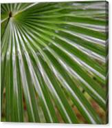 Rainforest At Foxground, Kiama Canvas Print