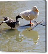 2002-ducks Canvas Print