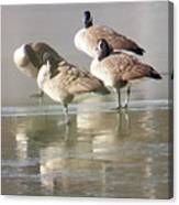 2004-geese On Ice Canvas Print