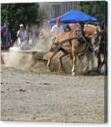 2009 Horse Pull Team A Canvas Print