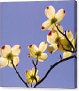 2009 Springtime  6399  Canvas Print