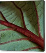 2010 Hydrangea Leaf Close Up 2 Canvas Print