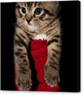 2010 Stocking Cat 2 Canvas Print