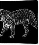 Tigers Gait Canvas Print