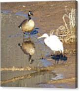 2012-white Crane And Canadian Goose Canvas Print