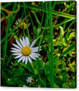2015 08 23 01 A Flower 1106 Canvas Print