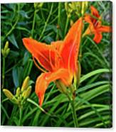 2016 July Garden Daylily Summer Afternoon Canvas Print