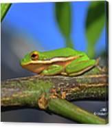 2017 11 04 Frog I Canvas Print