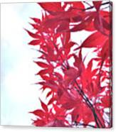 2017 Red Maple 3 Canvas Print