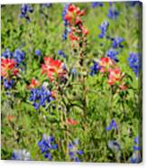 201703300-068 Indian Paintbrush Blossom 2x3 Canvas Print
