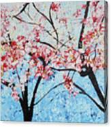 201726 Cherry Blossoms Canvas Print
