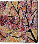 201727 Cherry Blossoms Canvas Print