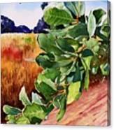 #203 Blue Oak Leaves 2 Canvas Print