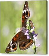 2065 - Butterfly Canvas Print