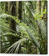 Jungle 99 Canvas Print