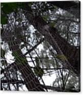 Australia - Spider Web High In The Tree Canvas Print