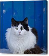 Cat On A Greek Island Canvas Print