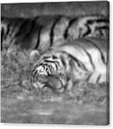 Hellabrunn Zoo - Munich, Germany Canvas Print