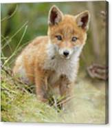 Red Fox Cub Canvas Print