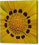 Australia - Yellow Daisy Flower Canvas Print