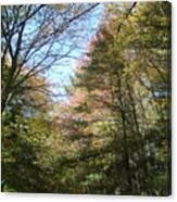 Autumn In Ma Canvas Print