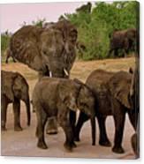 Botswana Canvas Print