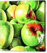 #227 Green Apples Canvas Print