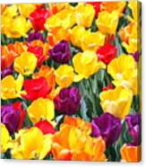 Amsterdam Tulips. Canvas Print