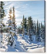 Amazing Landscape With Frozen Snow-covered Trees In Winter Morning  Canvas Print