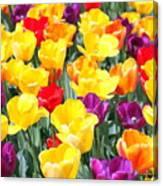 Amsterdam Tulips. Canvas Print