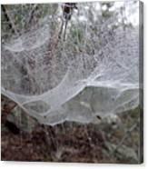 Australia - Concave Spider Web Canvas Print