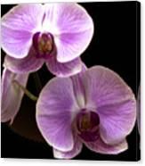 Orchids Kauai Canvas Print