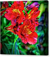 2647- Red Flowers Canvas Print