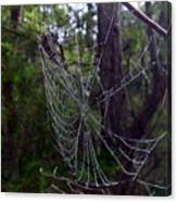 Australia - Uniquely Yours Spider Web Canvas Print