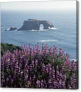 2a6101 Arched Rock And Blue Pod Lupine Ca Canvas Print