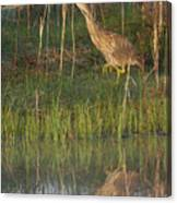 American Bittern Along The Shore Canvas Print