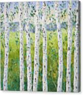 Aspen Trees Colorado Canvas Print