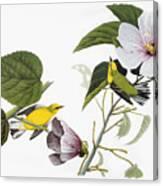 Audubon Warbler Canvas Print