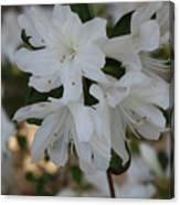 Azalea Flowers Canvas Print