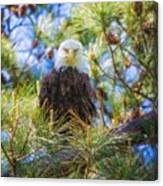 Bald Eagle Canvas Print
