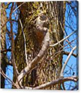 Bare Tree Branches In Early Spring Canvas Print