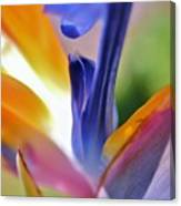 3 Bird Of Paradise Macro Canvas Print