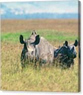 Black Rhinocerous Canvas Print