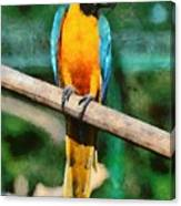 Blue And Gold Macaw Canvas Print