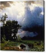 Buffalo Trail  The Impending Storm Canvas Print