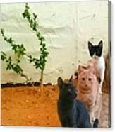 3 Cats Canvas Print