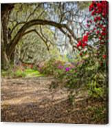Charlston Sc - Magnolia Plantations And Garden Canvas Print