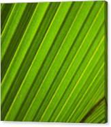 Coconut Palm Leaf Canvas Print