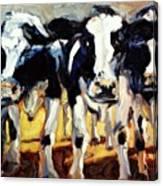 3-cows Canvas Print