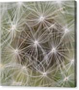 Dandelion Close-up. Canvas Print